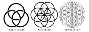 Tripod-Seed-Flower