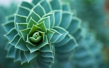 Nature-Spiral-Bokeh-Micro1