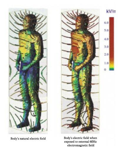 human body ELF exposure